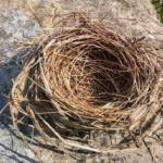 ムクドリの巣を撤去することでダニの駆除ができる!