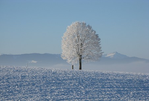 ムクドリ ねぐら 冬