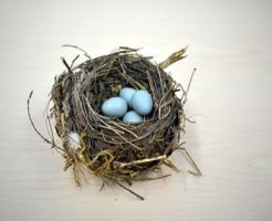 ムクドリ 卵 食べる