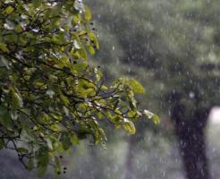 ムクドリ 雨の日 どこ